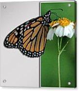 Blank Greeting Card 5 Acrylic Print