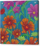 Blanket Flowers And Cosmos Acrylic Print
