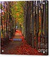 Blanket Of Red Leaves Acrylic Print