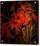 Blaze Of Leaves Acrylic Print
