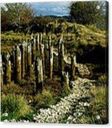 Blazing A New Trail  Acrylic Print