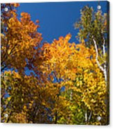 Blazing Autumn Colors - Just Lift Your Head Acrylic Print