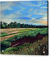 Blazing Sun On Farmland Acrylic Print
