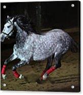 Blazzing Horse Acrylic Print