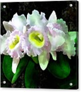 Blc Mary Ellen Underwood Krull-smith Acrylic Print