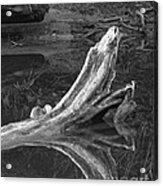Bleached Log 1 Acrylic Print