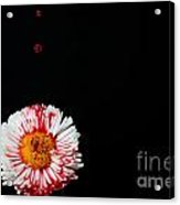 Bleeding Flower Acrylic Print