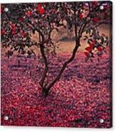Bleeding Tree Acrylic Print