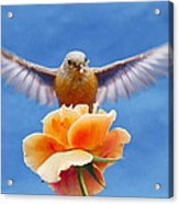 Bless  You Acrylic Print