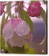 Blomming In The Rain Acrylic Print