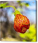 Blood Flower 9325 Acrylic Print