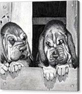 Bloodhound Puppies Dog Portrait  Acrylic Print