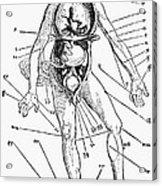 Bloodletting Chart, 1517 Acrylic Print