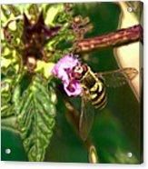 Bloom-fly  Leif Sohlman Acrylic Print