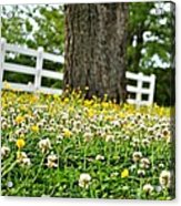 Bloom Gathering Acrylic Print by Beverly Hammond