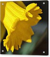 Bloom Acrylic Print by Thomas  MacPherson Jr