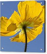 Bloom Time Acrylic Print by Heidi Smith