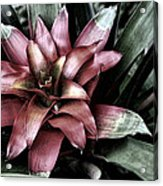 Bloom Acrylic Print by Tom Prendergast