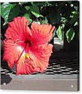 Bloom Where Planted Acrylic Print