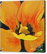 Bloomed Yellow Tulip Acrylic Print