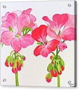 Blooming 1 Acrylic Print