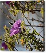Blooming Above The Lake Acrylic Print