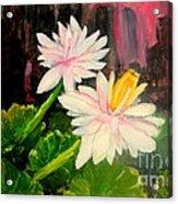 Blooming At Night  Acrylic Print