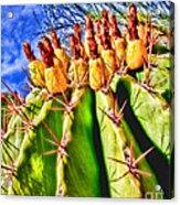 Blooming Barrel Cactus By Diana Sainz Acrylic Print