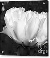 Blooming Cactus 2 Acrylic Print