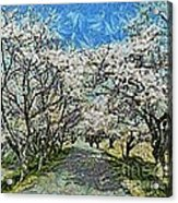 Blooming Cherry Tree Avenue Acrylic Print