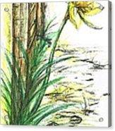 Blooming Daffodil Acrylic Print