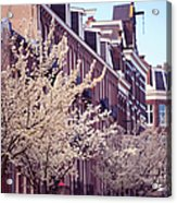 Blooming Decoration Of The Streets. Pink Spring In Amsterdam Acrylic Print