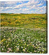 Blooming Fields Acrylic Print