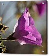 Blooming In The Afternoon Light Acrylic Print