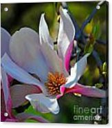 Blooming Light Acrylic Print