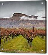 Blooming Orchards 2 Acrylic Print