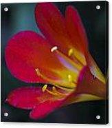 Blooming Summer Acrylic Print