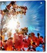 Blooming Sunlight Acrylic Print