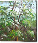 Blooming Tree Acrylic Print