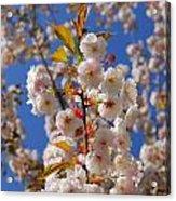 Blooming Trees Acrylic Print