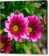 Blooming With Life Acrylic Print