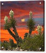 Full Blooming Yucca Acrylic Print