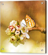 Blooms And Butterflies Acrylic Print