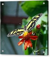 Blooms And Butterfly2 Acrylic Print