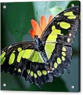 Blooms And Butterfly5c Acrylic Print