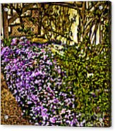 Blooms Beside The Steps Acrylic Print