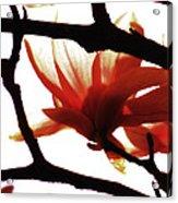 Blossom Abstract Acrylic Print