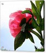 Blossom Bottom Acrylic Print