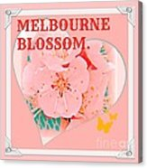 Blossom In Melbourne Acrylic Print