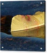 Blossom Rain 15 Acrylic Print